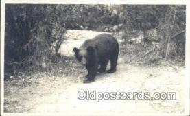 ber001429 - Bear Postcard, Bear Post Card Old Vintage Antique