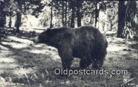 ber001430 - Bear Postcard, Bear Post Card Old Vintage Antique