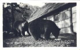 ber001432 - Mt. Baker Lodge North Cascades, Washington USA Bear Postcard, Bear Post Card Old Vintage Antique