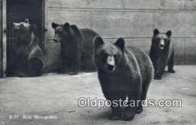 ber001435 - Bern Bear Postcard, Bear Post Card Old Vintage Antique