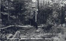 ber001436 - Marquette, Michigan, USA Bear Postcard, Bear Post Card Old Vintage Antique