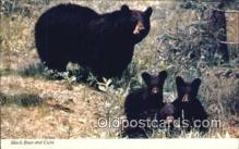 ber001437 - With Cubs Bear Postcard, Bear Post Card Old Vintage Antique