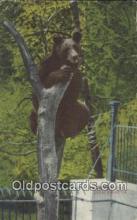 ber001442 - At Bever Park, Cedar Rapids, Iowa, IA USA Bear Postcard, Bear Post Card Old Vintage Antique