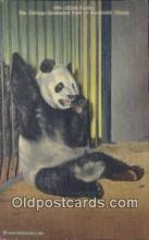 ber001444 - Chicago Zoo Brookfield, Ill Bear Postcard, Bear Post Card Old Vintage Antique