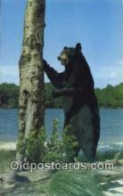 ber001446 - Bear Mountain State Park, NY USA Bear Postcard, Bear Post Card Old Vintage Antique