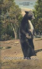ber001448 - Yosemite National Park, California, USA Bear Postcard, Bear Post Card Old Vintage Antique