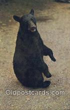 ber001450 - Bear Postcard, Bear Post Card Old Vintage Antique