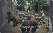 ber001452 - Bear Postcard, Bear Post Card Old Vintage Antique