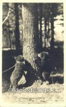 ber001462 - Cheboygan, Michigan, MI USA Bear Postcard Bear Post Card Old Vintage Antique