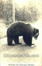 ber001463 - Greetings Ontonagon Michigan Bear Postcard Bear Post Card Old Vintage Antique