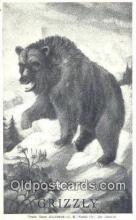 ber001466 - Grizzly Bear Postcard Bear Post Card Old Vintage Antique