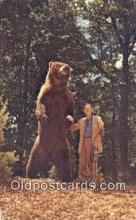 ber001469 - Alaska Brown Bear Postcard Bear Post Card Old Vintage Antique