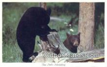 ber001470 - Bear Postcard Bear Post Card Old Vintage Antique