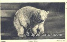 ber001474 - Polar Bear Postcard Bear Post Card Old Vintage Antique