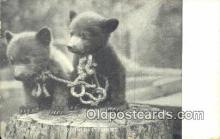 ber001475 - Bear Postcard Bear Post Card Old Vintage Antique