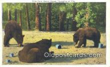 ber001476 - Bear Postcard Bear Post Card Old Vintage Antique