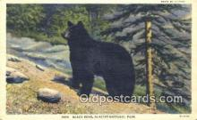 ber001478 - Glacier National Park Bear Postcard Bear Post Card Old Vintage Antique