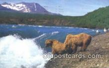 ber001487 - Alaska, Mc Neil River Bear Postcard Bear Post Card Old Vintage Antique