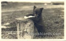 ber001489 - Indian Head, White Mts NH Bear Postcard Bear Post Card Old Vintage Antique