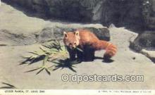 ber001495 - Lesser Panda, St. Louis Zoo USA Bear Postcard Bear Post Card Old Vintage Antique
