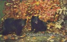 ber001497 - Bear Postcard Bear Post Card Old Vintage Antique