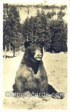 ber001500 - Photographer JH Eastman Bear Postcard Bear Post Card Old Vintage Antique