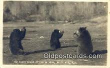 ber001503 - Real Photo- Indian Head, White Mts. NH USA Bear Postcard Bear Post Card Old Vintage Antique