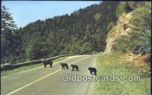 ber001504 - Mother & Cubs Bear Postcard Bear Post Card Old Vintage Antique