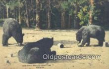 ber001509 - Rockies USA Bear Postcard Bear Post Card Old Vintage Antique