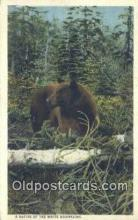 ber001510 - White Mts. NH USA Bear Postcard Bear Post Card Old Vintage Antique