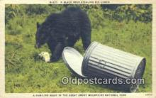ber001516 - Great Smokey Mountains National Park Bear Postcard Bear Post Card Old Vintage Antique