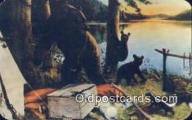 ber001517 - New York State, USA Bear Postcard Bear Post Card Old Vintage Antique