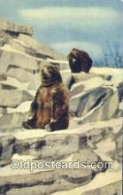 ber001519 - Chicago Zoo Brookfield, Ill Bear Postcard Bear Post Card Old Vintage Antique