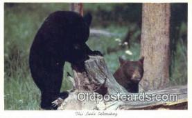 ber001523 - Bear Postcard Bear Post Card Old Vintage Antique