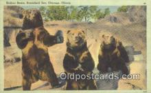 ber001524 - Brookfield Chicago, Ill, USA Bear Postcard Bear Post Card Old Vintage Antique