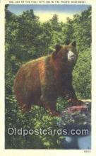 ber001526 - Pacific Northwest Bear Postcard Bear Post Card Old Vintage Antique