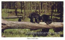 ber001527 - Bear Postcard Bear Post Card Old Vintage Antique