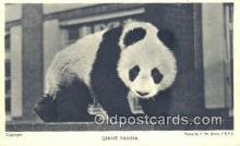 ber001532 - Bear Postcard Bear Post Card Old Vintage Antique