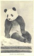 ber001536 - Su-Lin Bear Postcard Bear Post Card Old Vintage Antique
