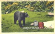 ber001541 - Great Smokey Mountains National Park Bear Postcard Bear Post Card Old Vintage Antique