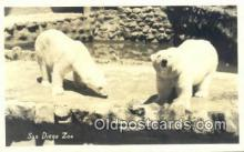 ber001543 - Real Photo San Diego Zoo, Cal USA Bear Postcard Bear Post Card Old Vintage Antique