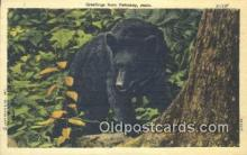 ber001546 - Petoskey, Mich, MI USA Bear Postcard Bear Post Card Old Vintage Antique