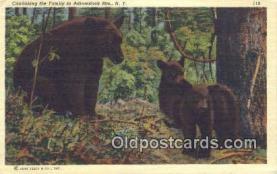 ber001549 - Adirondack Mountains, NY USA Bear Postcard Bear Post Card Old Vintage Antique