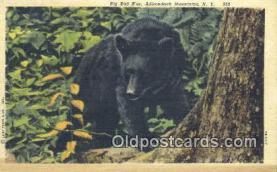 ber001552 - Adirondack Mountains, NY USA Bear Postcard Bear Post Card Old Vintage Antique