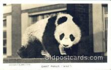ber001555 - Real Photo Ming Bear Postcard Bear Post Card Old Vintage Antique