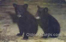 ber001557 - Bear Postcard Bear Post Card Old Vintage Antique
