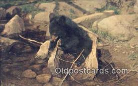 ber001558 - Bear Postcard Bear Post Card Old Vintage Antique