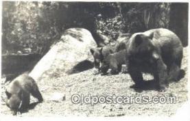 ber001559 - Yosemite National Park California, CA, USA Bear Postcard Bear Post Card Old Vintage Antique