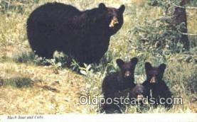 ber001560 - Bear Postcard Bear Post Card Old Vintage Antique