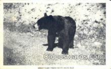 ber001562 - Greetings from Rest-Mor Isle Bear Postcard Bear Post Card Old Vintage Antique